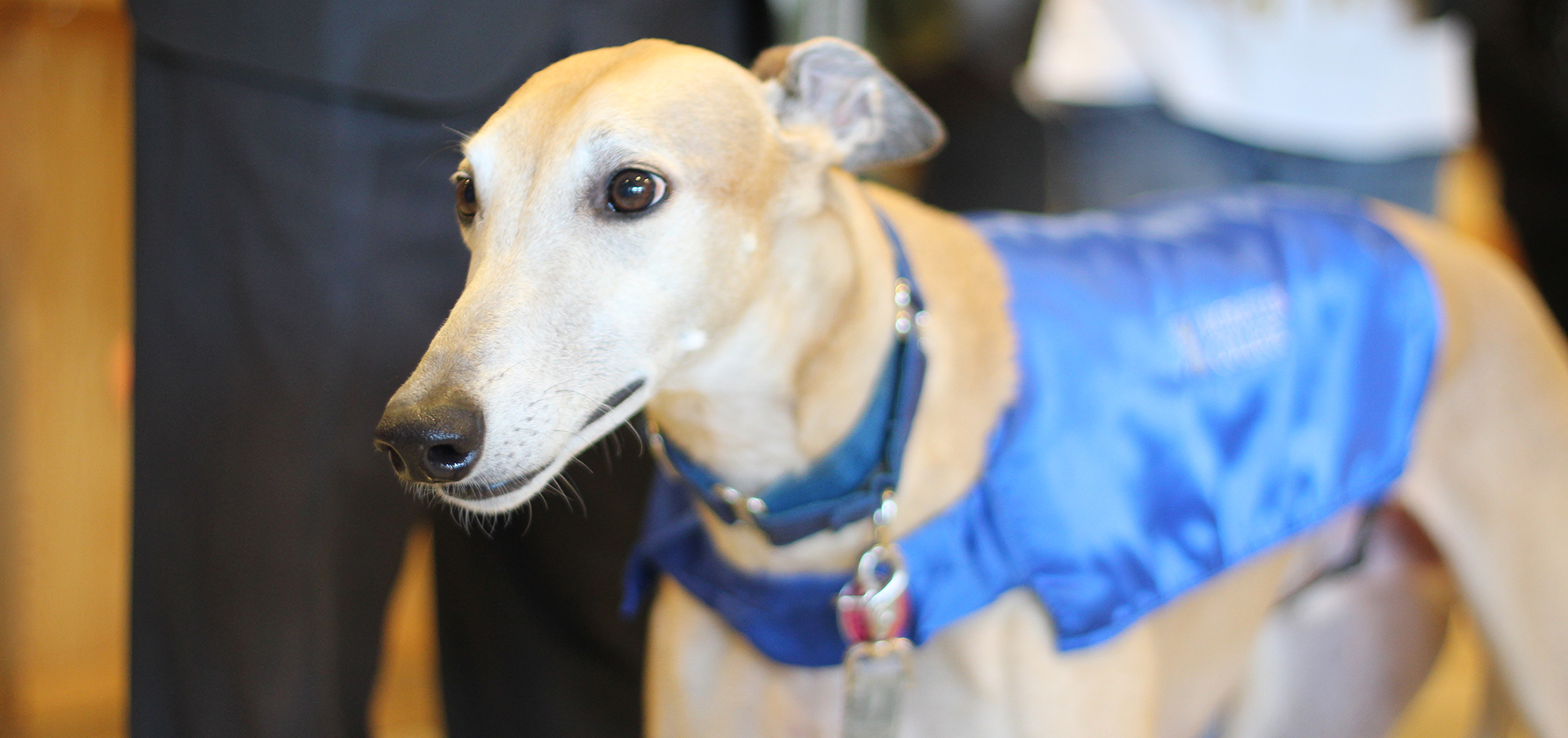 Mo, the greyhound